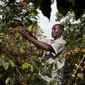 Good African Coffee Company