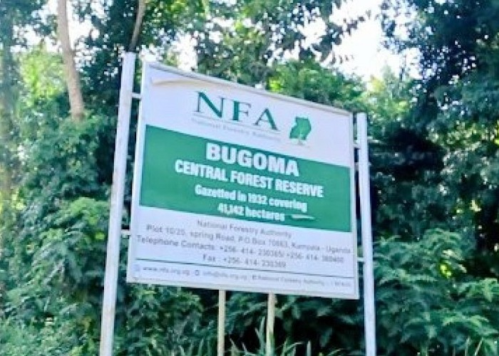 Environment activists protest Bugoma forest giveaway