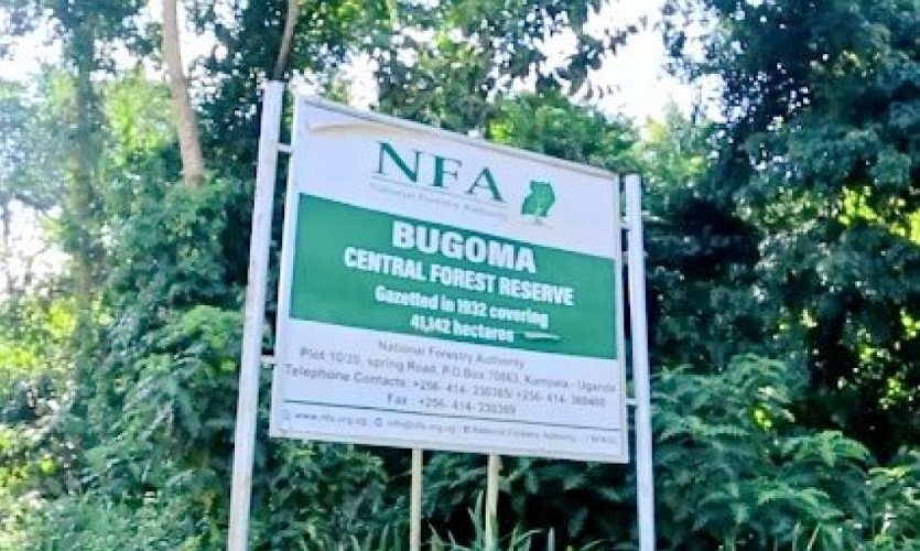Bugoma forest
