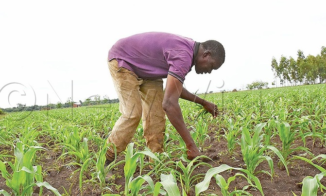 Food shortage looms as lockdown hits farmers