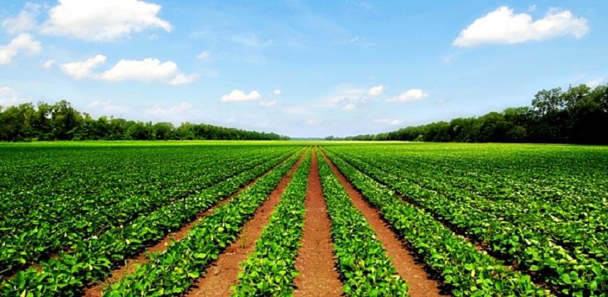 Agricultural-Land