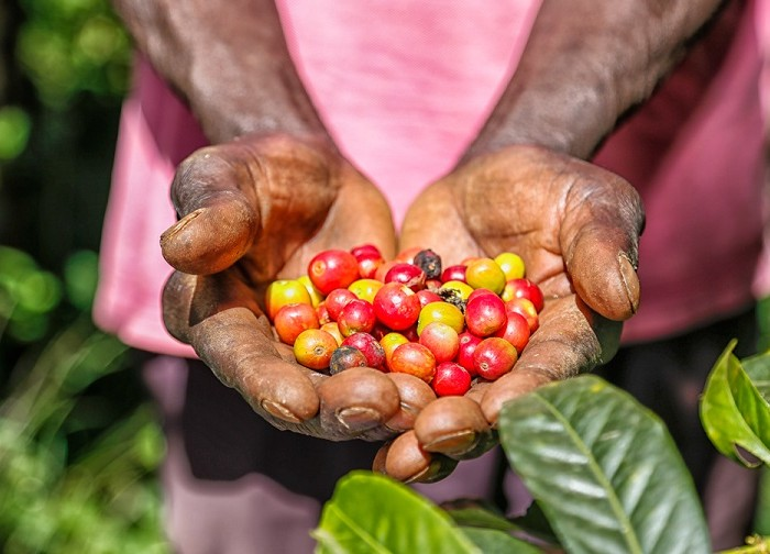Uganda Coffee Bill 2018 finally passed
