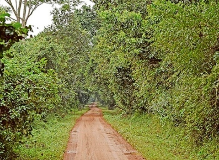 Experts fault NEMA on Bugoma Forest