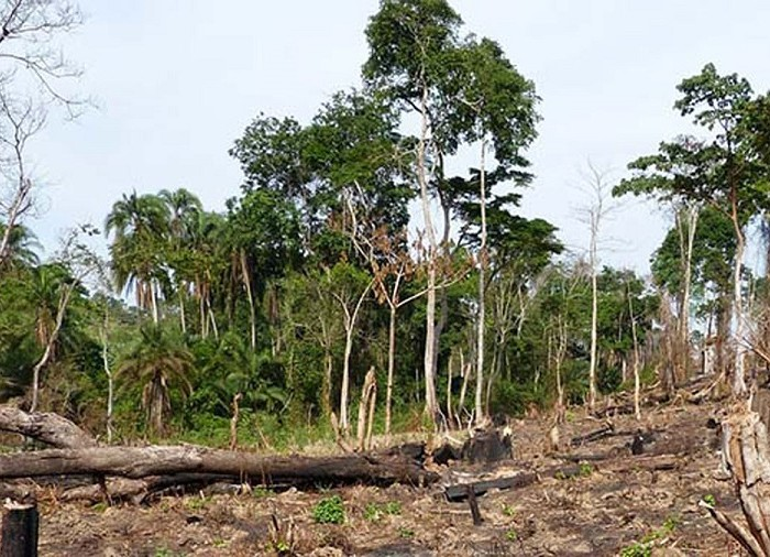 EU wants Bugoma Forest sugarcane project halted