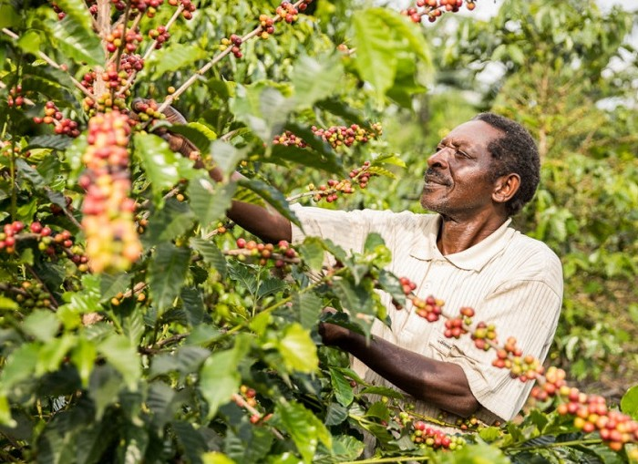 WORLD BANK: Agriculture key to ending poverty in Uganda