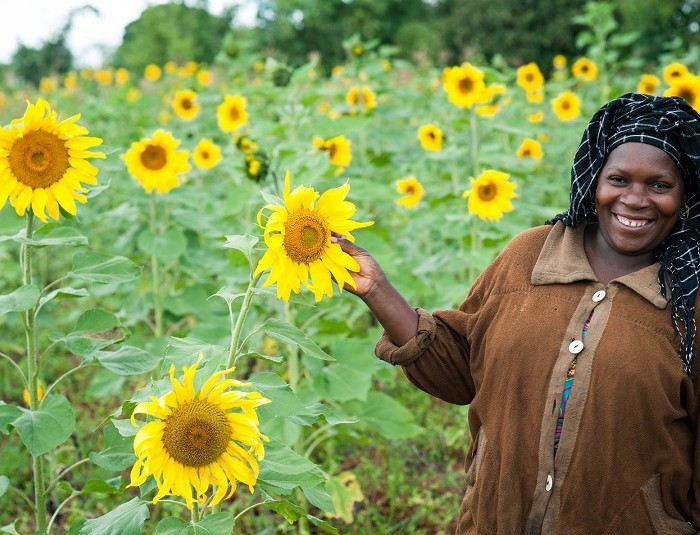 FAO boosts sunflower farmers in Kwania district