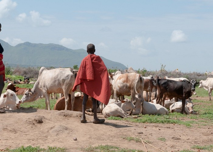 Agago bans Karimojong from grazing in district