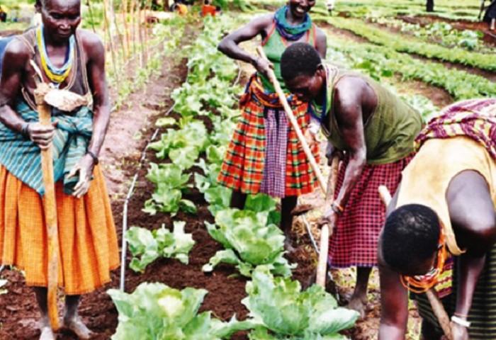 Solar Powered Irrigation to combat change in Karamoja Region