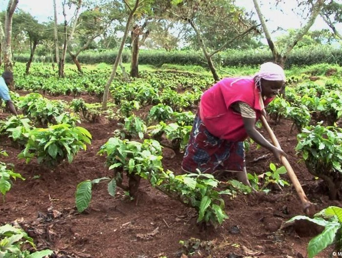 Is it impunity…? Uganda still adamant to give back land to local communities as ordered by the UN
