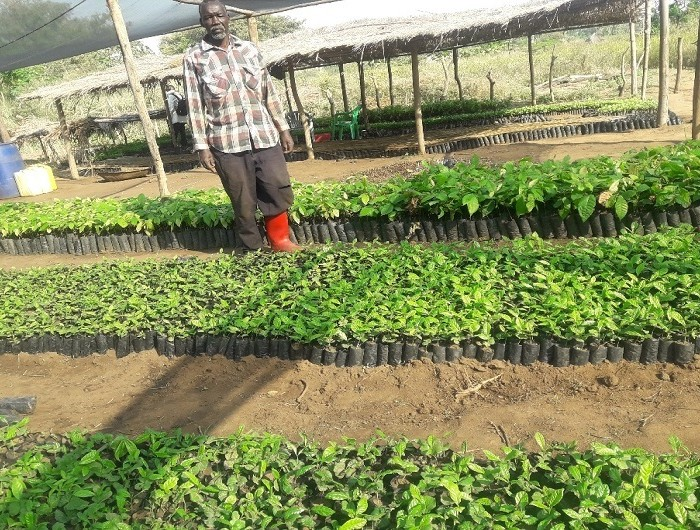 Nursery bed farmers stuck with seedlings