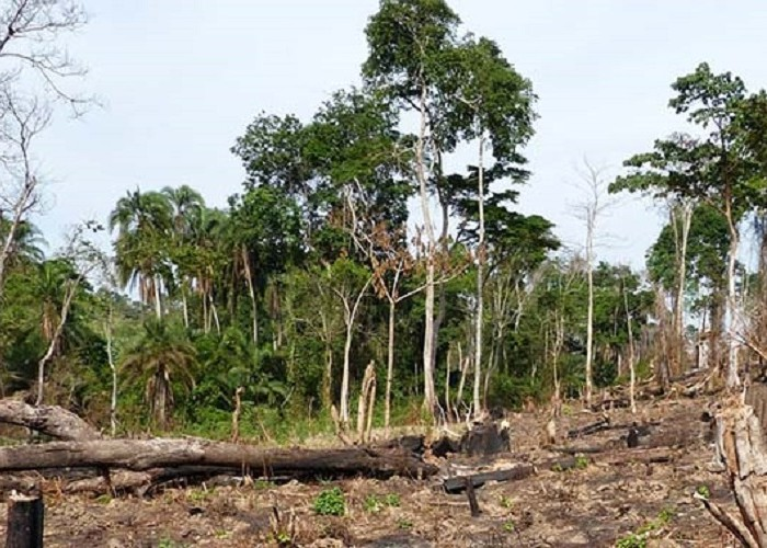 Bunyoro officials split over sale of Bugoma forest land