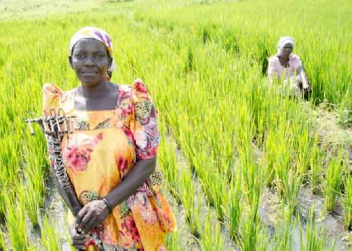 How unequal access to land by women endangers Uganda's food security
