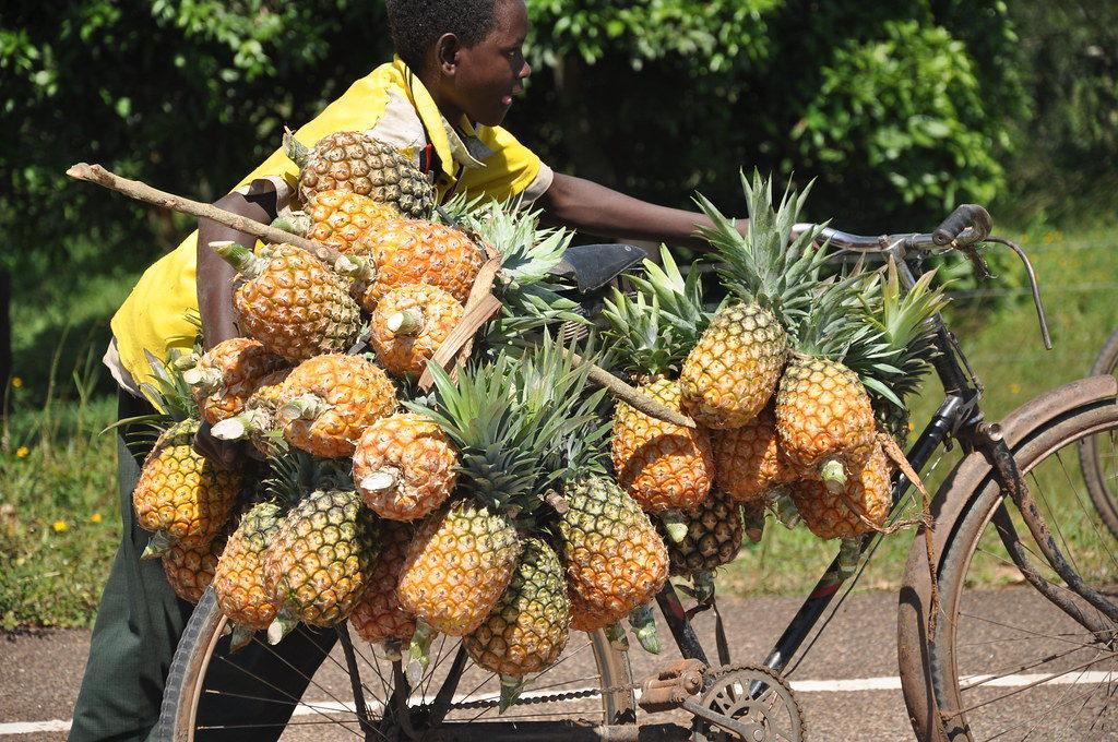 Pineapples uganda