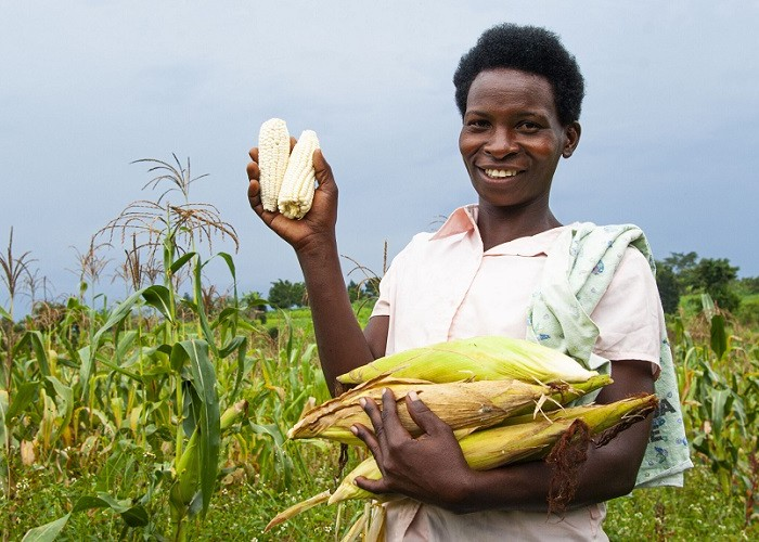 Agriculture rebounds as economy recovers