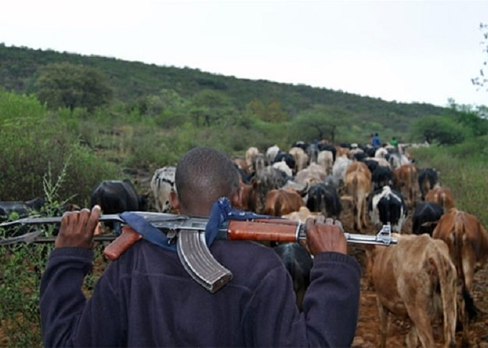 Cattle raids return to Karamoja