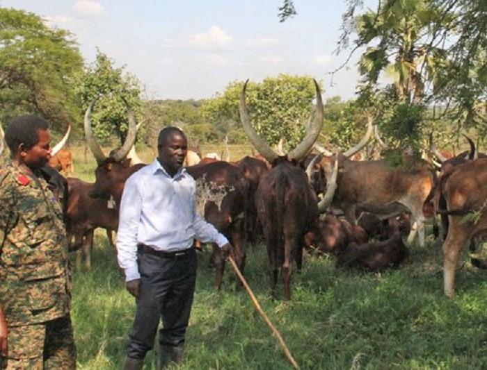 Govt imports semen to revamp Aswa Ranch