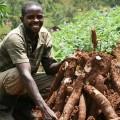 cassava-farming-agriculture