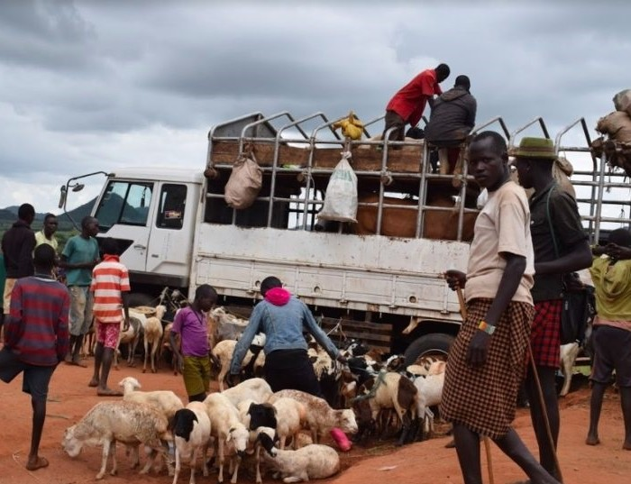 Cattle traders decry losses as army intensifies operations in Karamoja