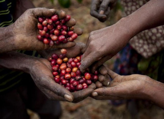Controversy over National Coffee Bill