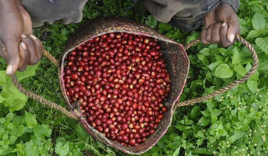 coffee_growing_terms_1200x1200