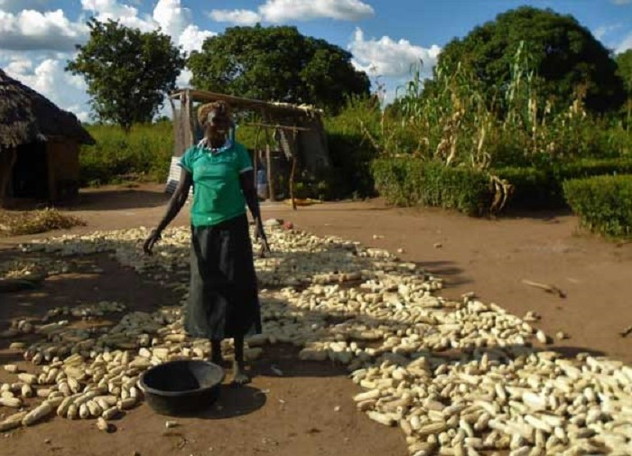 Gov't to distribute seeds to 300,000 households in Acholi