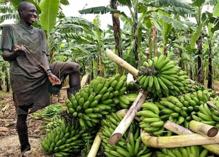 Agriculture budget passes Ugx 1 trillion mark
