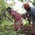 farming uganda