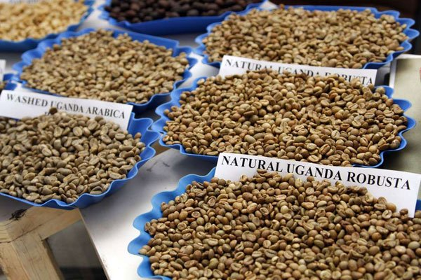 Companies dominating Uganda's coffee exports