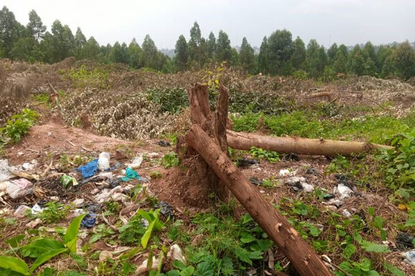 Namanve forest loses '80 hectares' to land grabbers