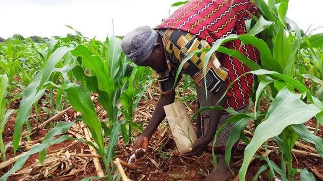 Chemicals ruining Uganda's soil, environment