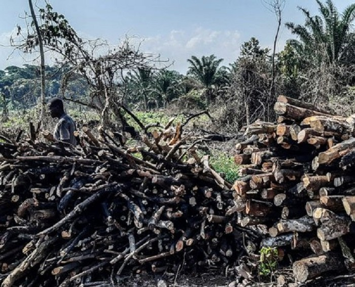 Kalangala loses 2,000 acres of forests in 2 years