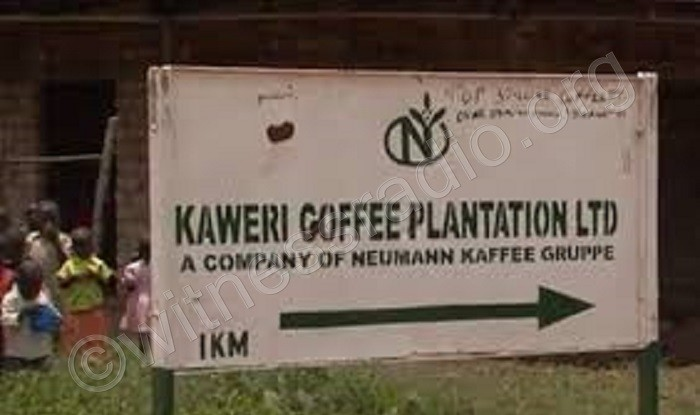 Coffee investor accused of evicting 400 peasants