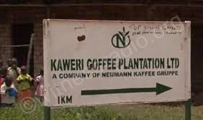 Coffee investor accused of evicting 400 peasants
