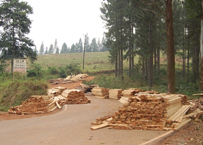 NFA deployment fails to halt logging, charcoal burning in Kyenjojo