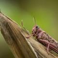 locusts-850x570