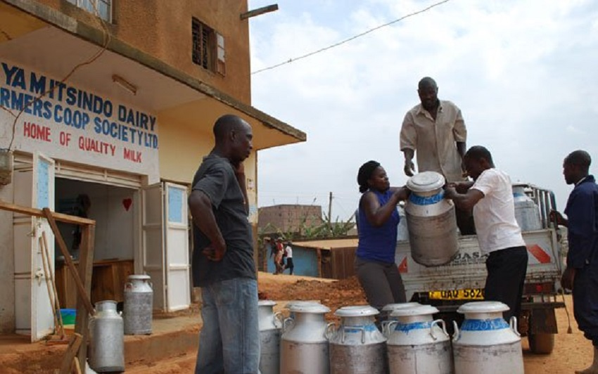 milk surplus Uganda
