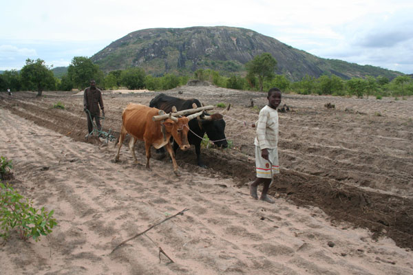 Africa's growth lies with smallholder farmers