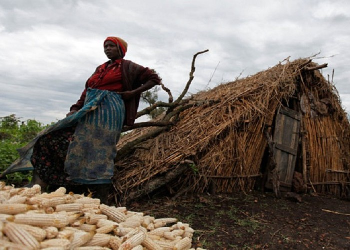 British forest firm that evicted Ugandan peasants closes shop