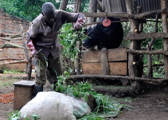 LRA war victims beat odds to succeed in dairy farming
