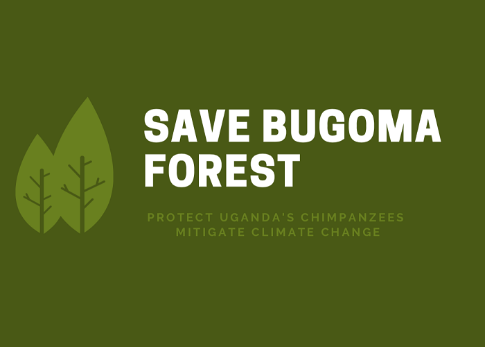 Why Uganda, the World should protect Bugoma forest at all costs