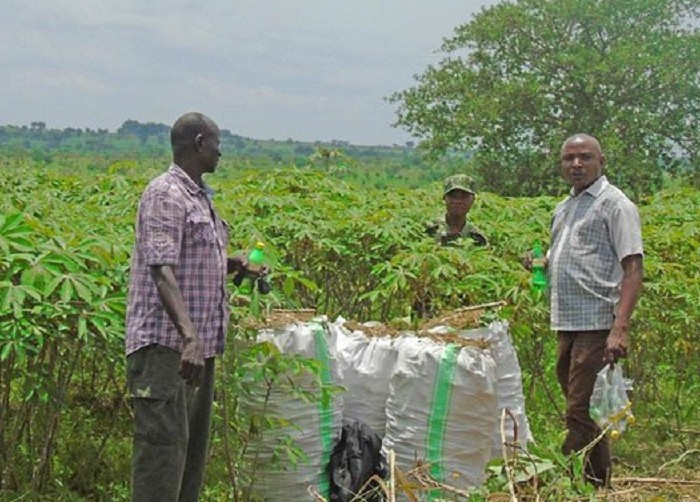 Omoro farmers task Naro on crop varieties