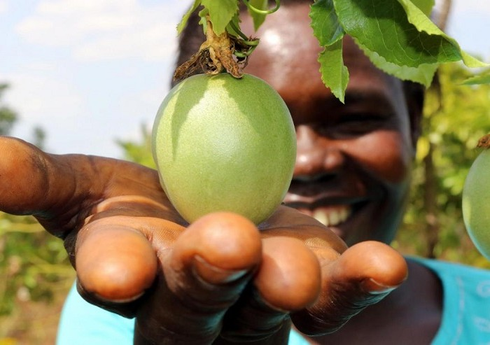 China province eyes $300 mln investment in Ugandan farming