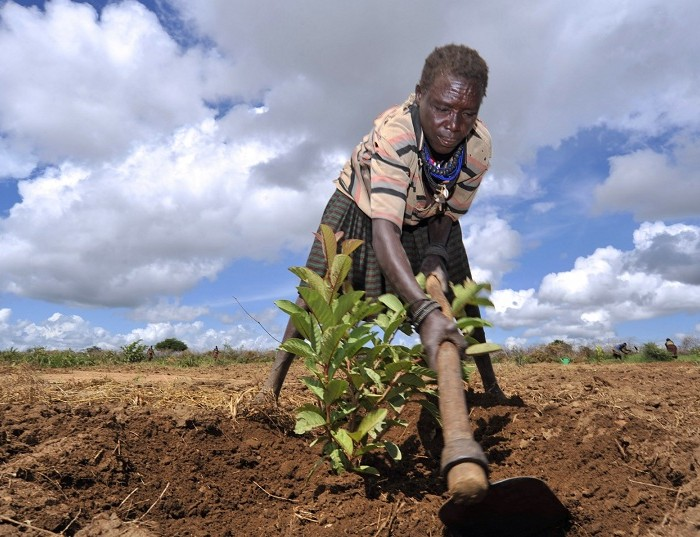 Uganda; Land for smallholder farmers is vanishing unbated