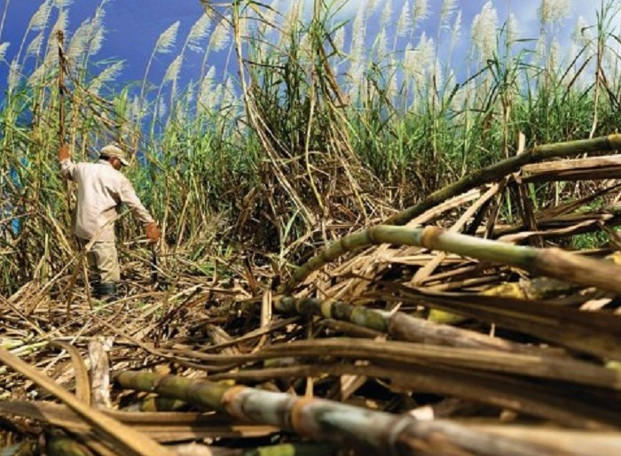 Sugar companies accused of grabbing forest reserves land